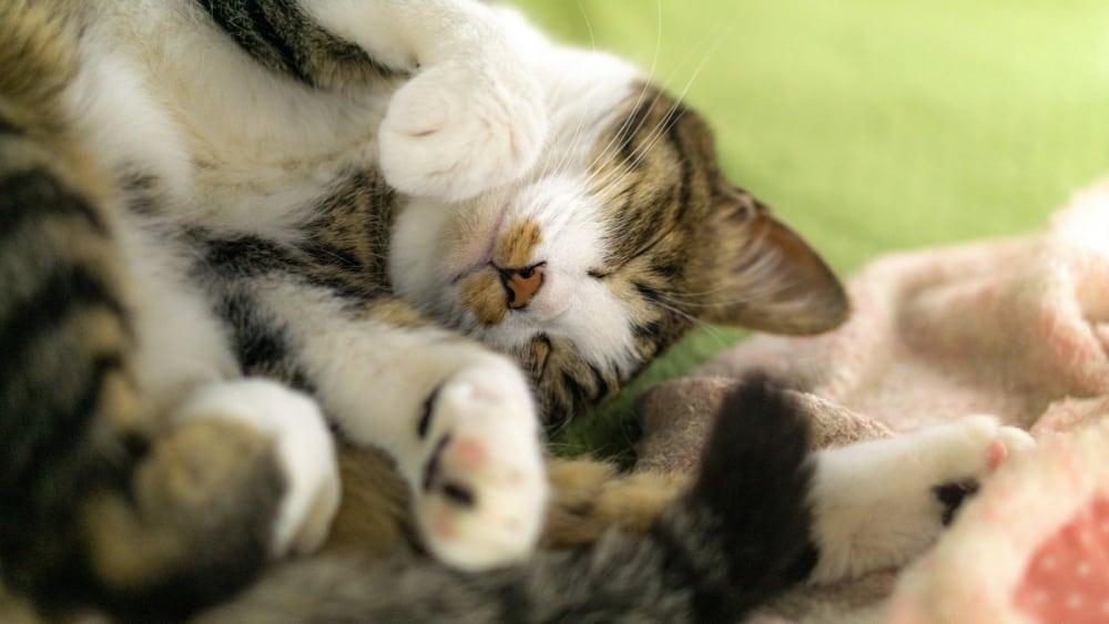 寝てる猫1