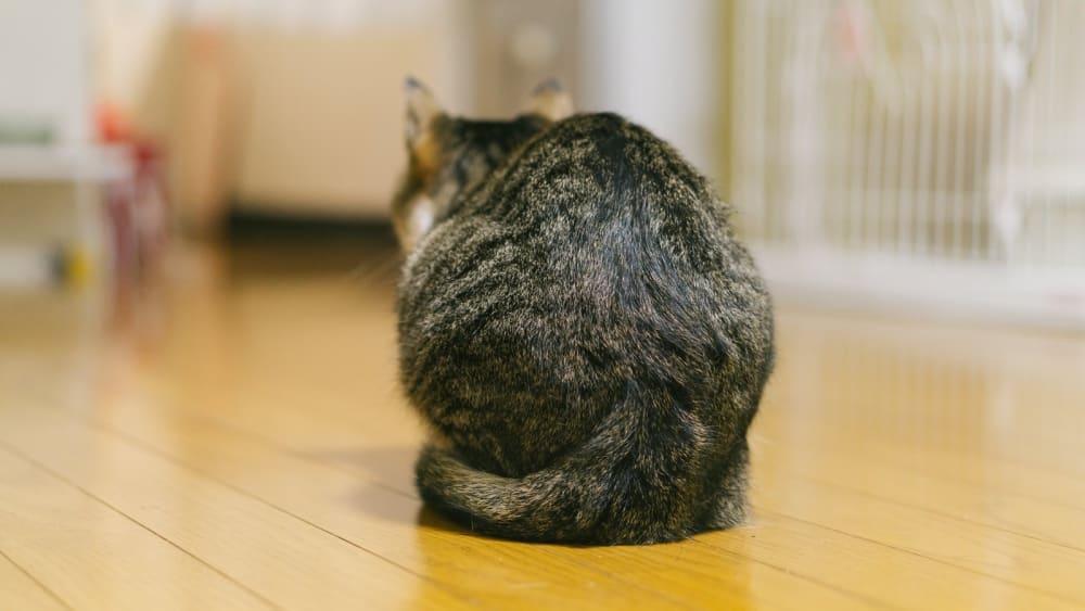 背を向ける猫