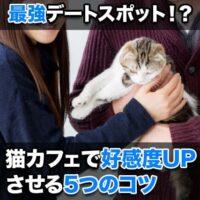 【成功率93%】付き合う前の猫カフェデートを大成功させる秘訣とは?