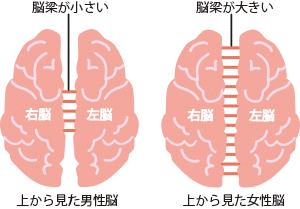 男性脳と女性脳